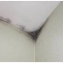 Prečo sa pleseň na stene tvorí aj po výmene okien?