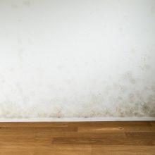 Ako zničiť a zabrániť ďalšej tvorbe plesní na stenách?